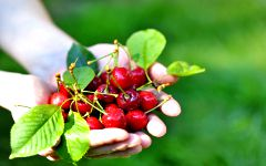 National Cherry Festival and NSW Riverina